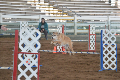 Winnie-Agility-March-2020-1_R
